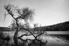 Lake in Napa Stock Image