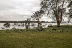 Lake of the natural park of kenya Royalty Free Stock Photo