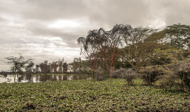 Lake of the natural park of kenya Royalty Free Stock Photography