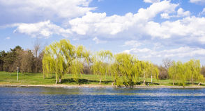Lake and nature Royalty Free Stock Image