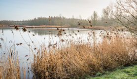 Lake in a nature reserve with a thin layer of ice Stock Photos