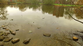 The Lake in Nature and Stones on Water stock footage