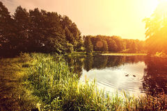 Lake and nature. Royalty Free Stock Image