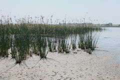 Lake near by the sea Royalty Free Stock Photography