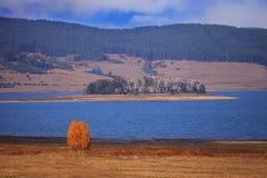 Lake near tree. Autumn field near lake with alone yellow tree Royalty Free Stock Photography