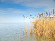 Lake Neusiedl Stock Images
