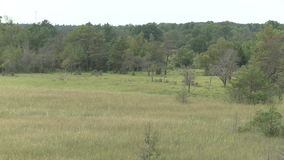 Lake next to the forest on Gotland in sweden. Marsh land on the island of Gotland in Sweden stock footage