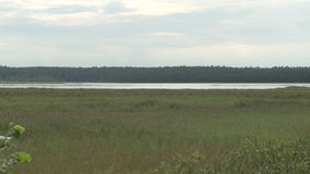 Lake next to the forest on Gotland in sweden. Marsh land on the island of Gotland in Sweden stock video