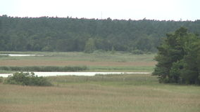Lake next to the forest on Gotland in sweden. Marsh land on the island of Gotland in Sweden stock video footage