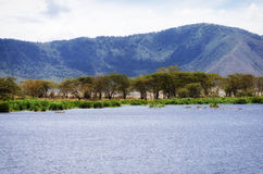 Lake, Ngorongoro Crater Royalty Free Stock Images