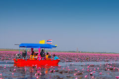 Lake Nong Harn, Thailand. The sea of red lotuses or Talay Bua Daeng. One of the worlds strangest lakes from CNN. Locate in the province of Udon Thani, northeast Royalty Free Stock Photos