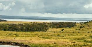 Lake Nukuru, Kenya Royalty Free Stock Photo