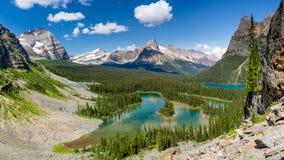 Lake O`Hara Bird`s Eye View. Yoho National Park, British Columbia Stock Photography