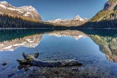 Lake O`Hara Reflection Royalty Free Stock Photography
