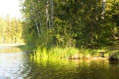 Lake och natur royaltyfri bild