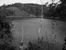 Lake och skog Fotografering för Bildbyråer