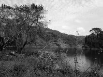 Lake och skog Royaltyfri Foto