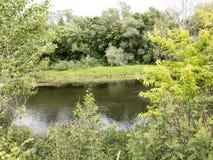 Lake och tree liggande Arkivbild