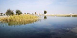 Lake och trees arkivfoton
