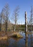 Lake och trees Royaltyfria Foton