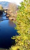 Lake och trees Arkivbild