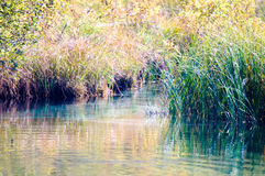 Lake offshore vegetation Royalty Free Stock Image