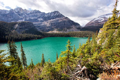 Lake Ohara. An image from the trail of lake osea high above the shores of the popular Lake Ohara. In british columbia, canada Royalty Free Stock Images