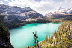 Lake Ohara, yoho. An image from the trail of lake osea high above the shores of the popular Lake Ohara. In british columbia, canada Royalty Free Stock Photos