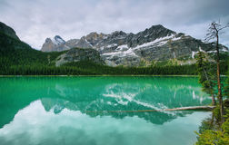 Lake Ohara, Yoho national park Royalty Free Stock Images