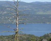 Lake Okanagan. View from a ridge overlooking Lake Okanagan Royalty Free Stock Images