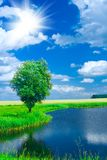Lake On A Field Stock Images