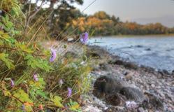 Lake Onega, Karelia, Россия стоковое фото rf