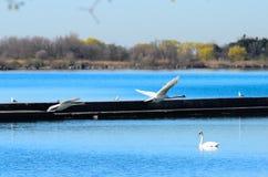 Lake of Ontario landscape Stock Photo