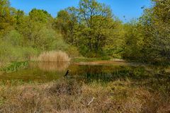 Lake in Orgi Forest in Ulzama. Near the town of Lizaso to be able to walk in the nature between centennial oaks. Europe, day, colorful, sky, scenic, park stock image