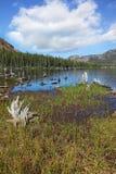 A lake, overgrown with grass Stock Photos