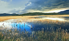 The lake, overgrown with reeds Stock Images