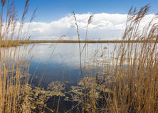 Lake, overgrown with reeds and willow stalk Stock Photos