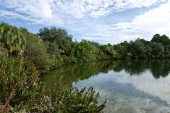 Lake with palm trees and dense foliage and reflections. Lake scene with palm trees and dense foliage. There is a reflection on the water. Taken at Wall Springs stock images