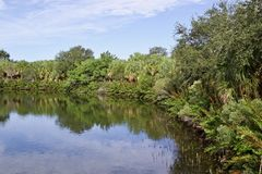 Lake with palm trees and dense foliage. Lake scene with palm trees and dense foliage. There is a reflection on the water. Taken at Wall Springs park royalty free stock photography