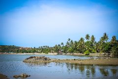 Lake and palms, Samui island, Thailand Royalty Free Stock Image