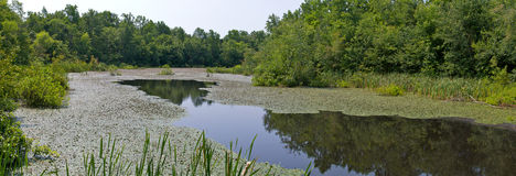 Lake Panorama. An extremely high-resolution panoramic shot of Sloan Lake in the Mammoth Cave National Park in Kentucky Royalty Free Stock Photography
