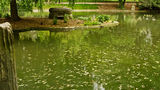 Lake in the Parc Monceau Stock Image