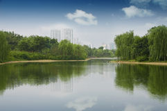 Lake in the park. Weeping willow tree on the bank of a lake Royalty Free Stock Photo
