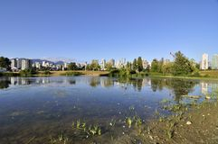 Lake in a park Royalty Free Stock Photo