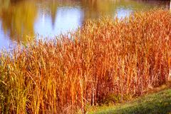 Lake in the park. Lake in the autumn park Royalty Free Stock Image