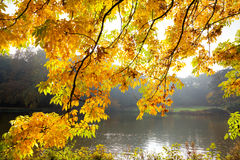 Lake in the park in autumn. Royalty Free Stock Photo
