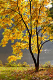 Lake in the park in autumn. Royalty Free Stock Photography