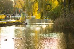 The lake in the park. royalty free stock photos