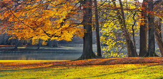 Lake in the park in autumn. Park in Autumn. Stock Image