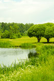 The lake in the Park. Beautiful lake surrounded by greenery Royalty Free Stock Photos